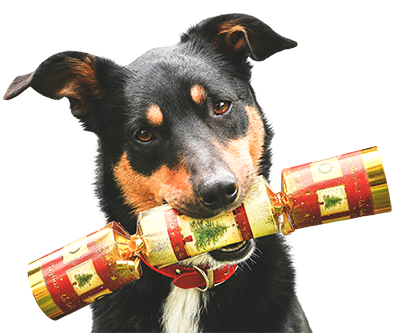 Decorative image of a dog holding a christmas cracker