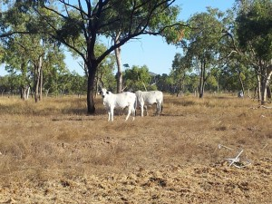 Rotarians to support Australian farmers